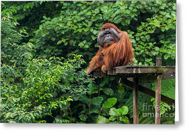 Borneo, Malaysia - September 6, 2014 Greeting Card