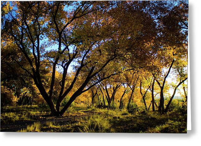 Bosque Color Greeting Card