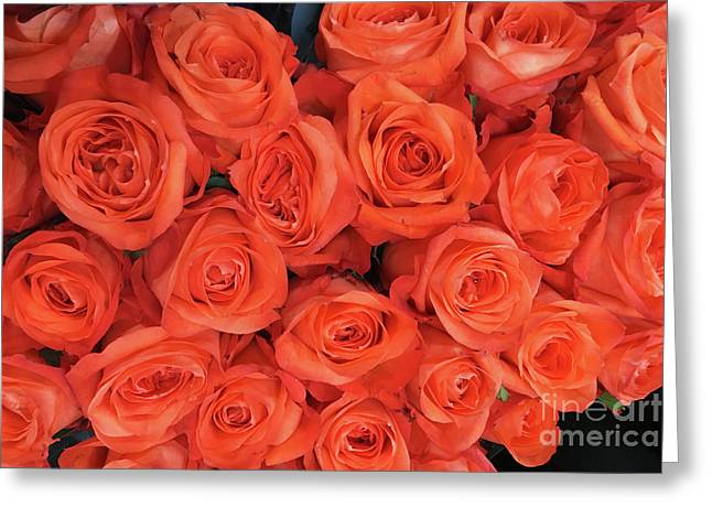 Bouquet Of The  Living Coral Roses Greeting Card