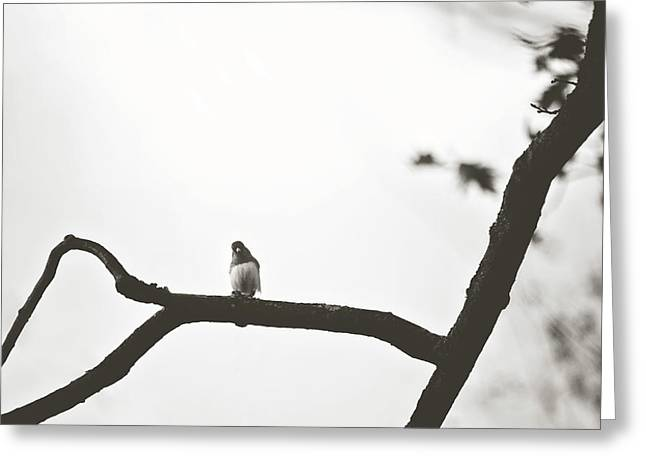 Greeting Card featuring the photograph Branching Out by Sue Collura