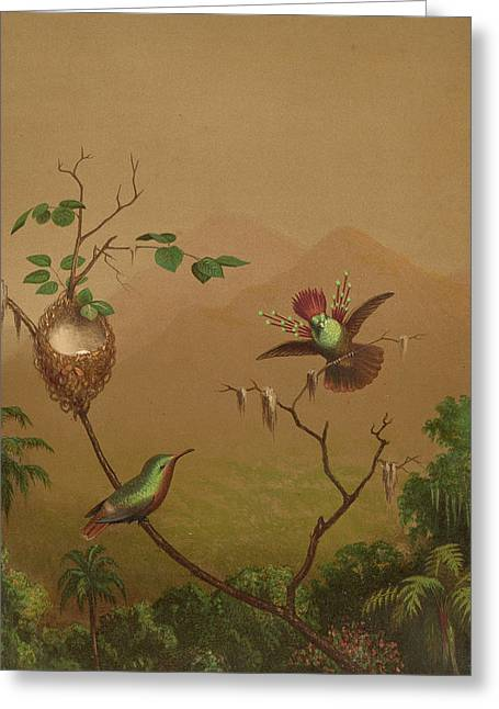 Brazilian Hummingbirds Iv Greeting Card