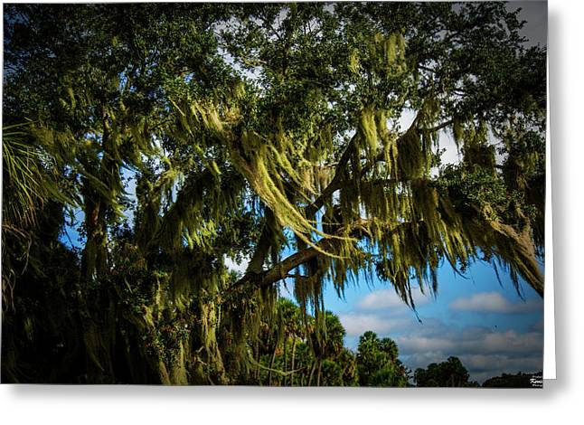 Breezy Florida Day Greeting Card