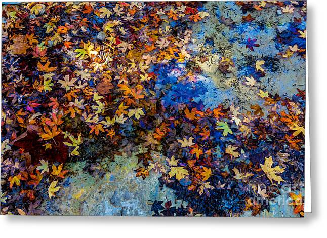 Bright Beautiful Fall Foliage Floating Greeting Card