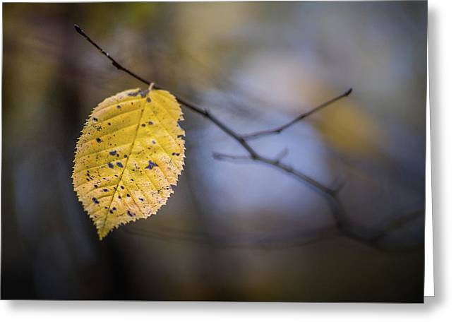 Greeting Card featuring the photograph Bright Fall Leaf 1 by Michael Arend