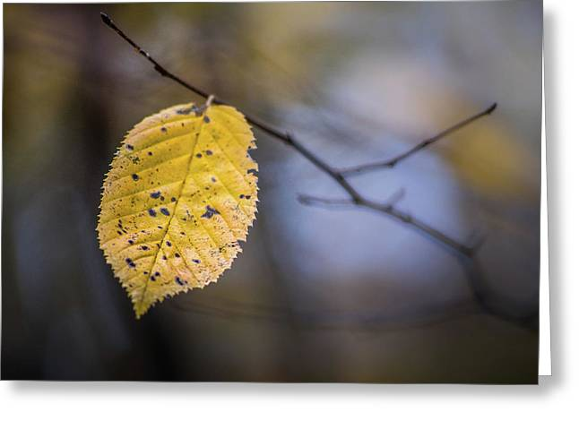 Greeting Card featuring the photograph Bright Fall Leaf 3 by Michael Arend