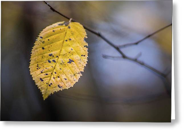 Greeting Card featuring the photograph Bright Fall Leaf 5 by Michael Arend