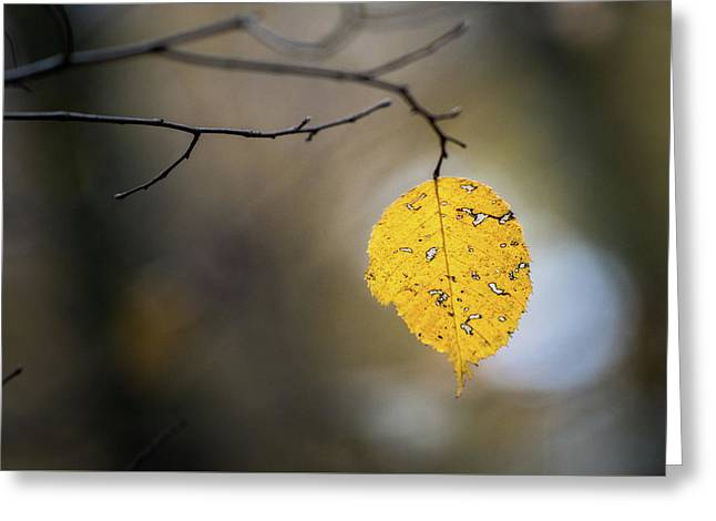 Greeting Card featuring the photograph Bright Fall Leaf 6 by Michael Arend