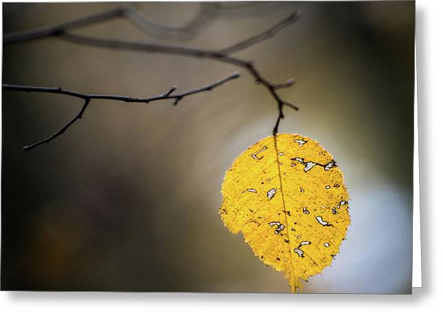 Greeting Card featuring the photograph Bright Fall Leaf 7 by Michael Arend