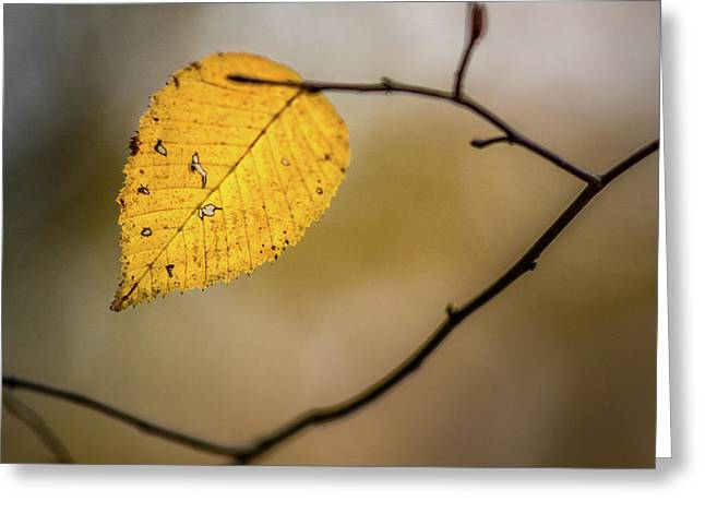 Greeting Card featuring the photograph Bright Fall Leaf 8 by Michael Arend