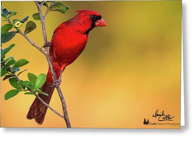 Bright Red Cardinal Greeting Card