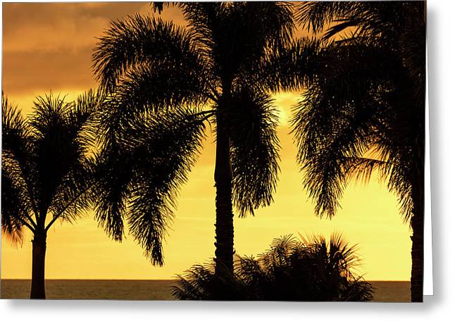Bright Yellow Sky With Palm Tree Greeting Card