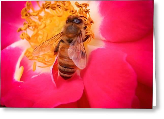 Brilliant Bee Greeting Card