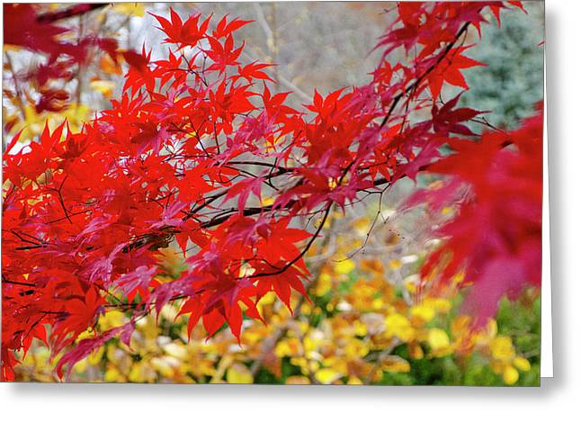 Brilliant Fall Color Greeting Card