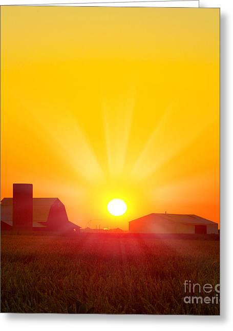Brilliant Orange Sunrise Over A Corn Greeting Card