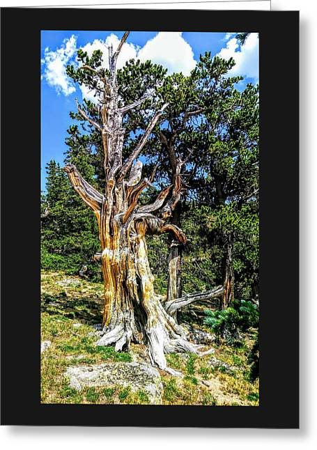Greeting Card featuring the photograph Bristlecone1 2018 by Aaron Bombalicki