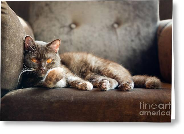 British Cat At Home Greeting Card