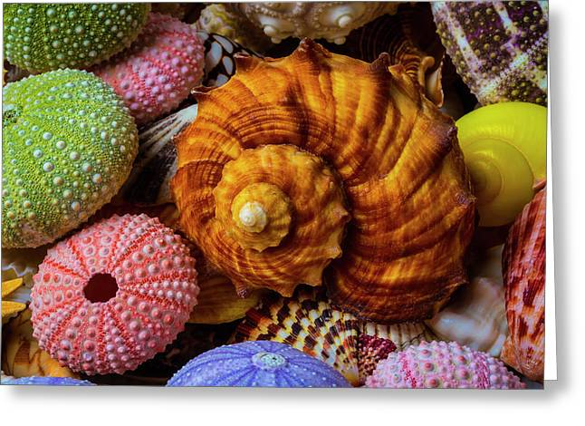 Brown Sea Snail Shell And Urchins Greeting Card