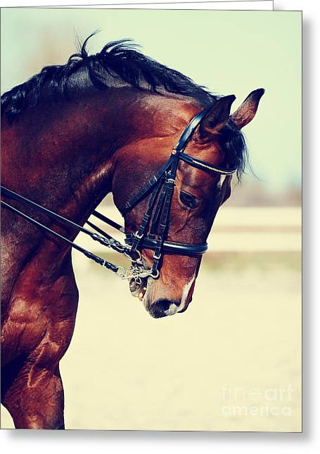 Brown Stallion. Portrait Of A Sports Greeting Card
