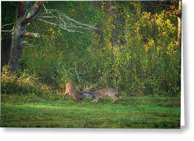 Greeting Card featuring the photograph Buck Battle by Jeff Phillippi