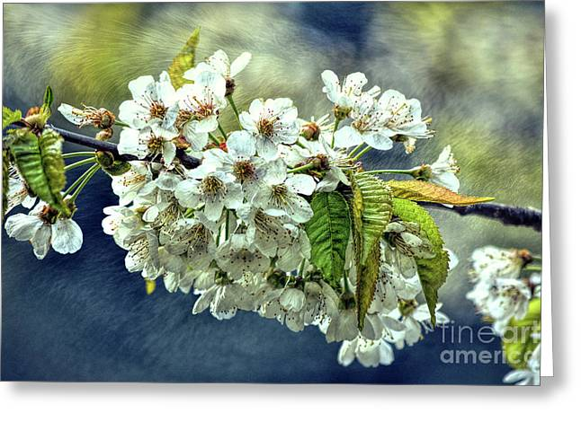 Budding Blossoms Greeting Card
