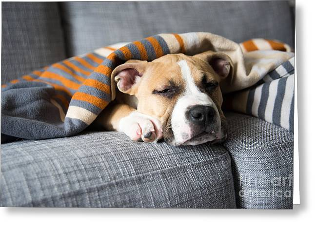 Bulldog Mix Puppy Sleeping On Gray Sofa Greeting Card