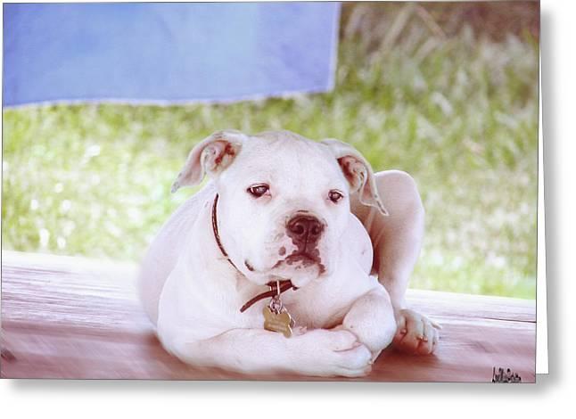 Bulldog Rana Art 80 Greeting Card