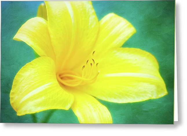 Buttered Popcorn Daylily In Her Glory Greeting Card