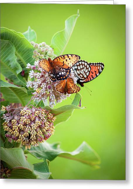 Greeting Card featuring the photograph Butterfly Buffet II by Jeff Phillippi