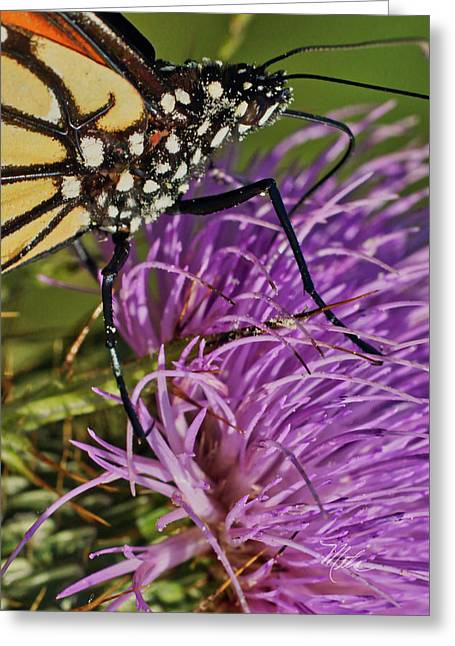 Butterfly Closeup Vertical Greeting Card