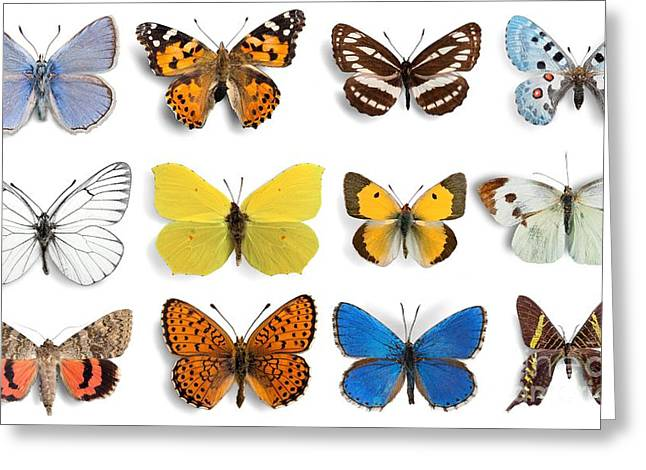 Butterfly, Insect, Wing Greeting Card
