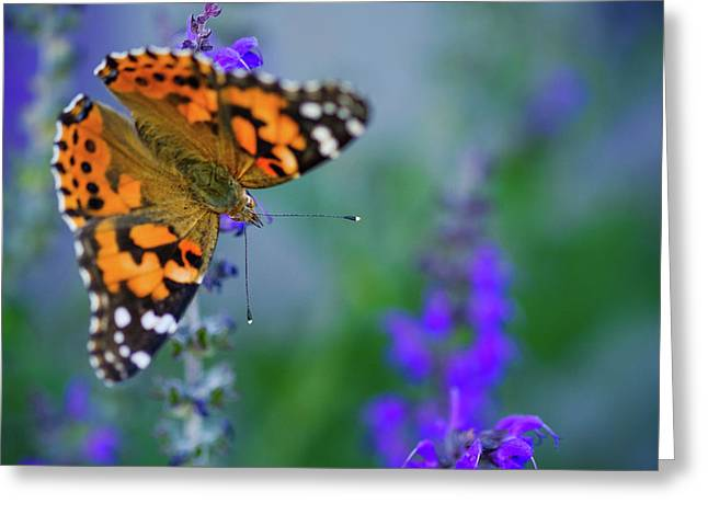 Greeting Card featuring the photograph Butterfly by Nicole Young