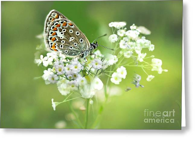 Butterfly On Babybreath Greeting Card