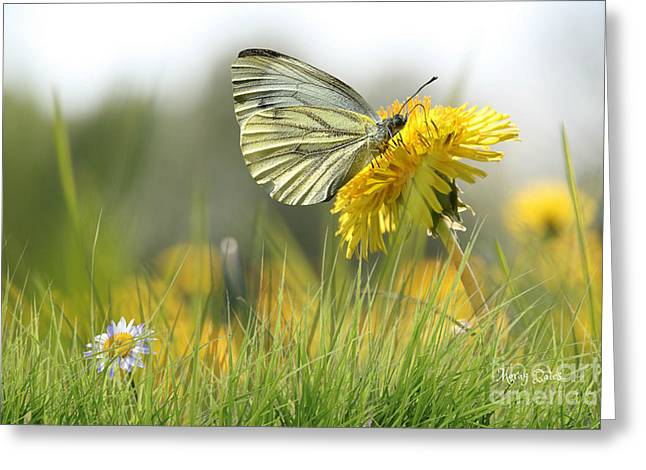 Butterfly On Dandelion Greeting Card