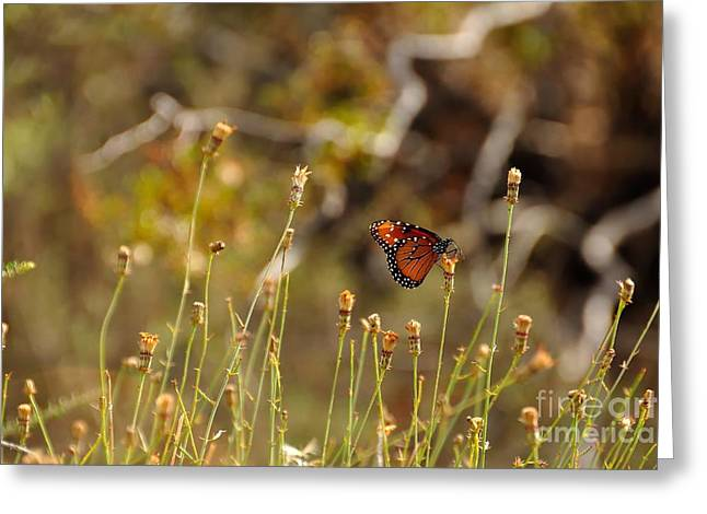 Butterfly On Wildflower In Joshua Tree Greeting Card