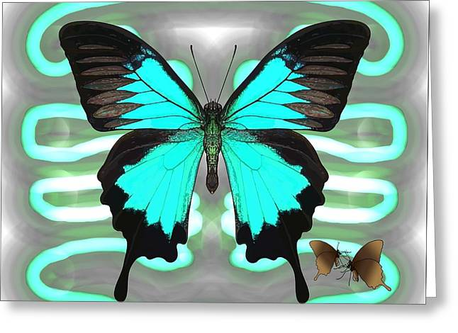Butterfly Patterns 24 Greeting Card