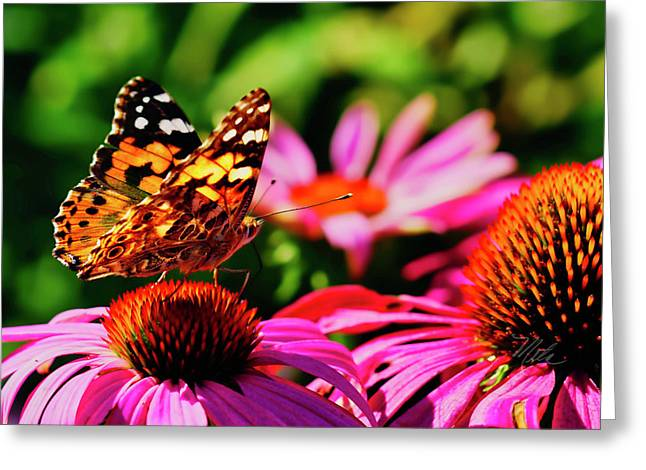 Greeting Card featuring the photograph Butterfly Side by Meta Gatschenberger
