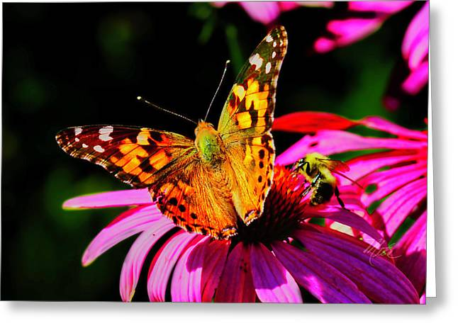 Greeting Card featuring the photograph Butterfly Wings Open by Meta Gatschenberger