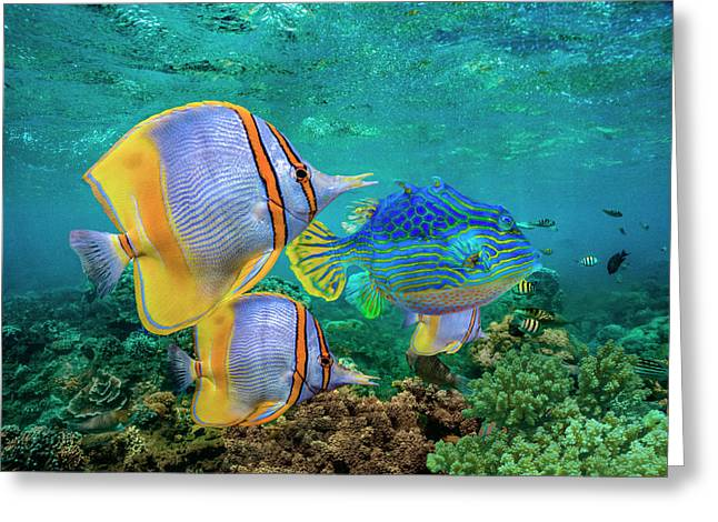 Butterflyfish And Horned Boxfish, Coral Greeting Card