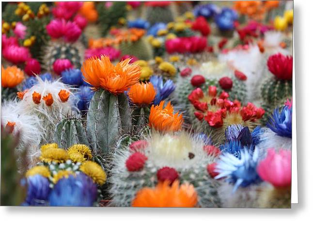 Greeting Card featuring the photograph Cacti Flowers by Top Wallpapers