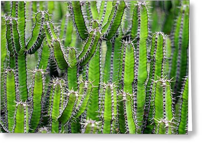Cacti Wall Greeting Card