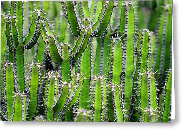 Greeting Card featuring the photograph Cacti Wall by Top Wallpapers