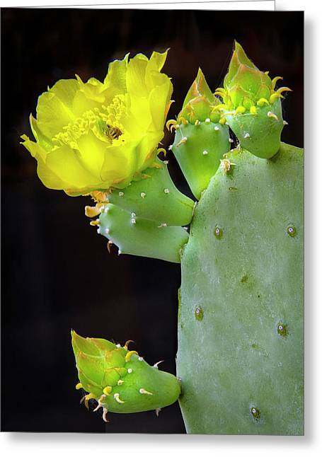 Cactus Blooms With Bee II Greeting Card