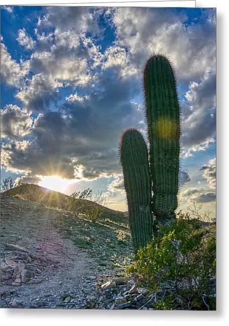 Cactus Portrait  Greeting Card