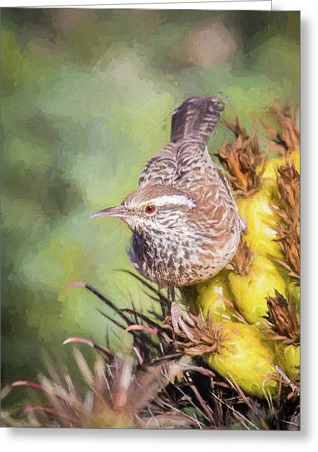 Cactus Wren Greeting Card