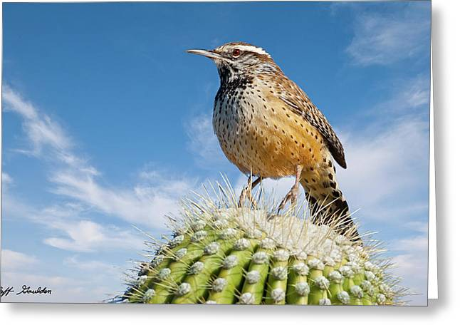 Cactus Wren On A Saguaro Cactus Greeting Card