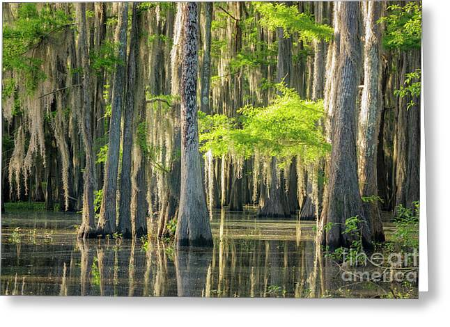Caddo Swamp 1 Greeting Card