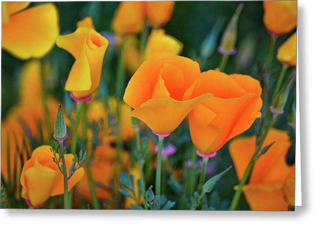 California Poppies Lake Elsinore Greeting Card