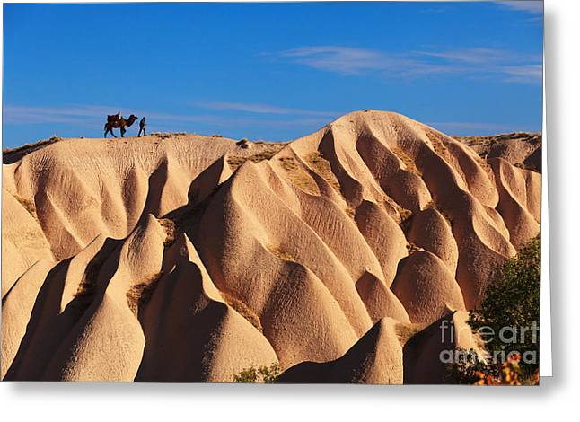 Camel And The Cameleer On The Rock And Greeting Card by Yavuz Sariyildiz