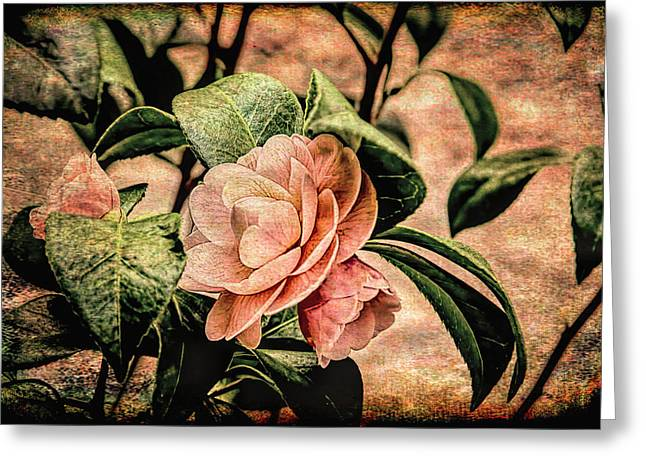 Camellia Grunge Greeting Card