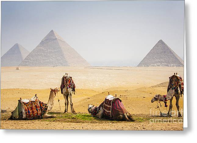 Camels With Pyramid Greeting Card